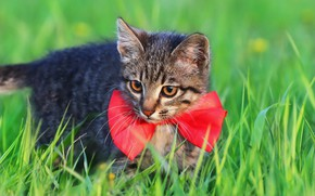 Picture cat, weed, bow