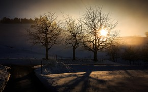 Picture winter, light, morning