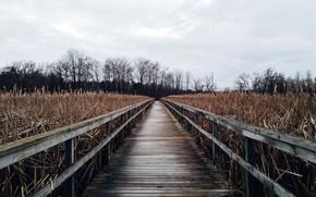 Picture bridge, nature, reed