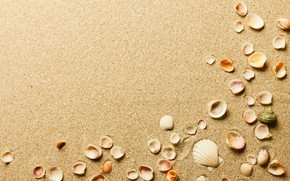 Picture sand, shell, shell