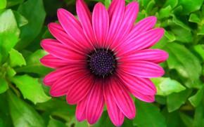 Picture flower, leaves, petals, garden