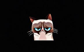 Picture cat, face, mood, figure, black background, blue eyes, picture, Tartar Sauce, Grumpy Cat, Tardar Sauce, ...