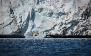 Picture sea, snow, ice, predator, iceberg, floe, polar bear, polar