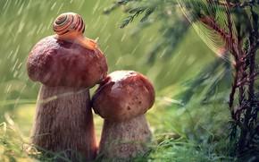 Picture macro, nature, rain, mushrooms, snail, web, branch, needles, Julia Voinich, Julia Voynich