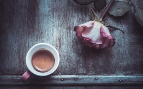 Picture flower, rose, coffee