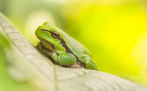 Picture grass, nature, stay, frog, tree