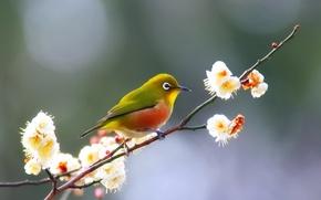 Picture bird, flowers, branch, spring, bokeh