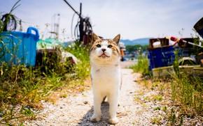 Picture summer, cat, Kota
