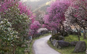 Picture stones, track, Japan, flowering in the spring