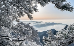 Wallpaper winter, frost, mountains, branches, China, China, pine, Huangshan Mountains, Huangshan Mountain