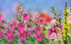 Picture Blur, Flowers, malwy