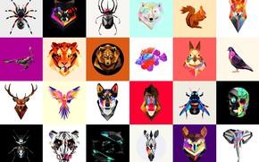 Picture abstract, spider, sake, monkey, bear, fox, rabbit, dog, lion, scorpion, predator, wolf, fish, elephant, zebra, …