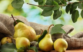 Picture harvest, fruit, pear