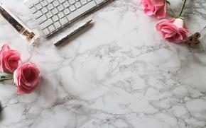 Wallpaper stapler, marble, roses, keyboard, pink, roses, handle, flowers