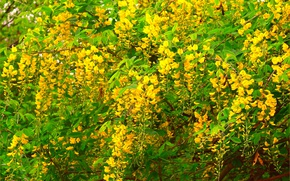 Picture Spring, Spring, Flowering, Yellow flowers, Flowering, Yellow flowers
