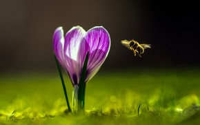Picture flower, summer, nature, bee