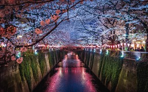 Wallpaper light, flowers, night, the city, lights, people, spring, Japan, Sakura, channel