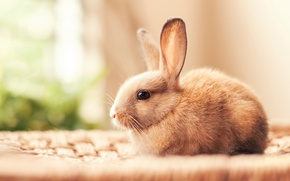 Wallpaper rabbit, light, small, bokeh
