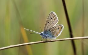 Picture butterfly, macro, graas, Richard Kosmala