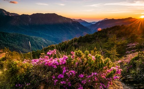 Picture greens, forest, the sky, the sun, clouds, rays, landscape, sunset, flowers, mountains, nature, fog, glare, …