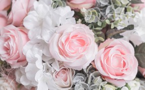 Picture flowers, roses, petals, pink, white, buds