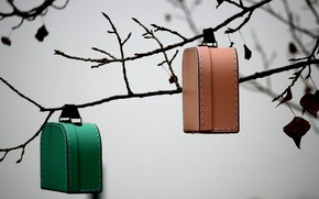 Picture background, branch, suitcases