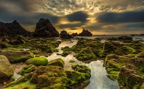 Wallpaper nature, moss, sunset, stones