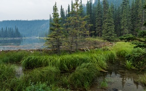 Wallpaper forest, grass, water, trees, lake, Alaska, haze, Denali National Park, Horseshoe Lake