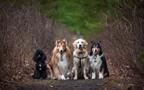 Picture road, dogs, nature