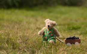 Picture field, grass, nature, berries, mood, toy, harvest, bear, bear, bear, truck, jumpsuit, Teddy, BlackBerry, toy, …