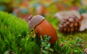 Picture Grass, Autumn, Grass, Autumn, acorn