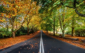 Wallpaper beauty, road, landscape, nature