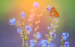 Wallpaper butterfly, light, macro, flowers
