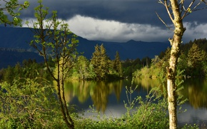Picture forest, clouds, trees, reflection, river, Washington, Columbia River, the Columbia river, Washington State