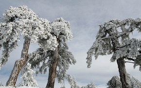 Picture winter, forest, the sky, snow, trees