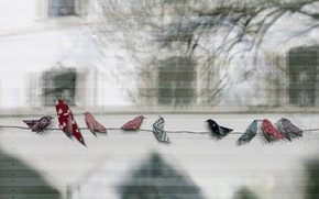 Picture birds, background, rope