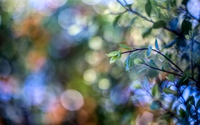 Picture leaves, branch, bokeh