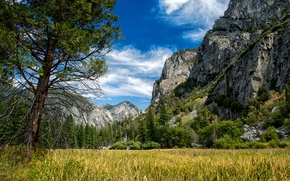 Picture Mountains, Trees, USA, Parks, Sequoia and Kings National Park
