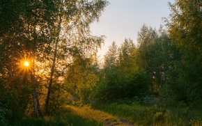 Picture summer, the sun, trees, sunset, Forest