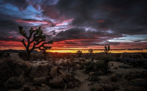 Wallpaper clouds, desert, CA, glow, USA, National Park Joshua tree