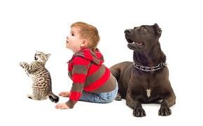 Picture cat, child, dog, boy, background, boys, dogs, child, cats, glance