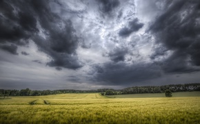Picture field, the sky, clouds, nature