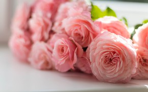 Picture roses, bouquet, pink, bokeh