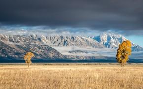 Wallpaper mountains, field, trees