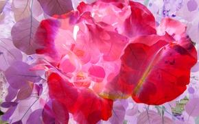 Wallpaper leaves, line, petals, paint, rendering, flowers