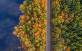 Wallpaper forest, the view from the top, water, trees, road