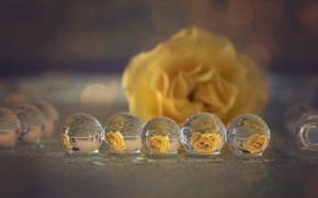 Wallpaper macro, reflection, bubbles, rose yellow