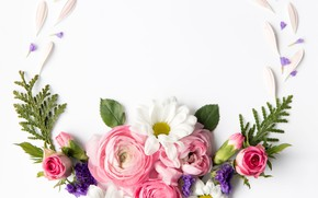 Picture flowers, roses, white background, buds, flowers, decor, Ranunculus