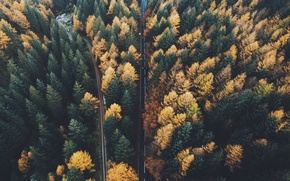 Wallpaper forest, autumn, trees, road, nature, the view from the top