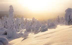 Picture winter, light, snow
